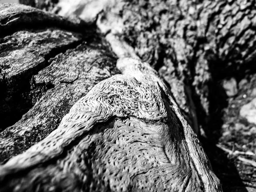 Noeud de chêne - Hors Sentiers