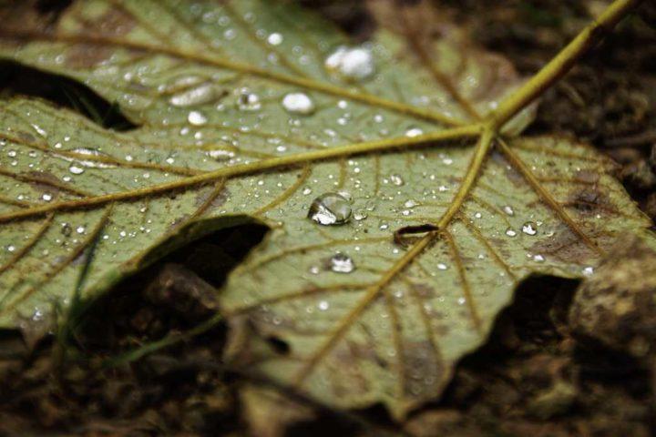 Goutte d'automne - Hors Sentiers